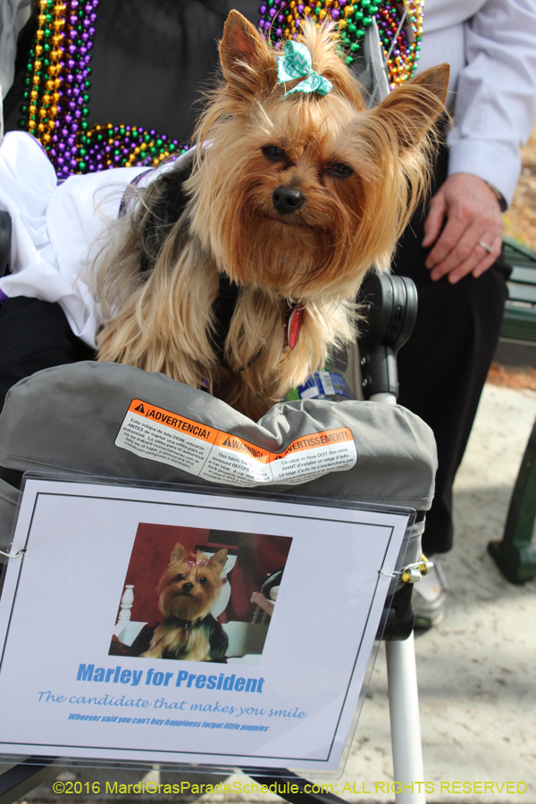 2016 Mystic Krewe Of Barkus Presents Quot 2016 From The Dog
