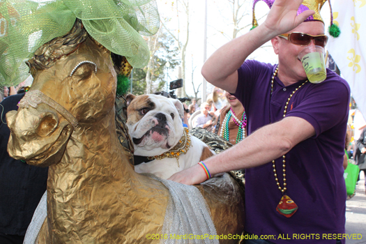Barkus, Mystic Krewe of 2016 - photo by H. Cross