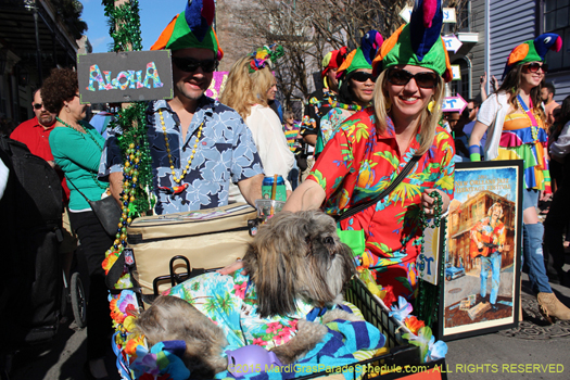 2015 Mystic Krewe of Barkus - photo by H. Cross