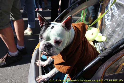 Young Jedi in Barkus 2015 - photo by H. Cross